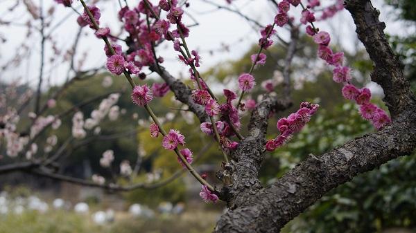 春季养生:饮食方面有哪些注意事项?